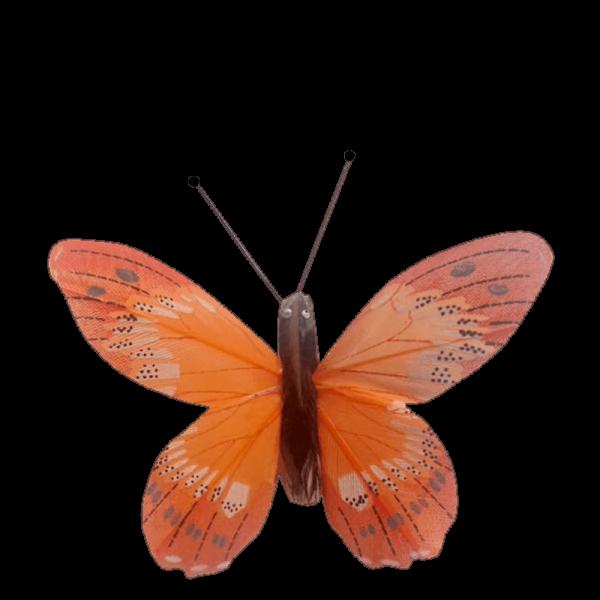 Papillon Écologique Plume Inox Ailes Fier Albatros Orange